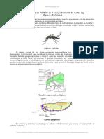 Rol Anexos Del Snc Comportamiento Aedes Spp Diptera Culicidae