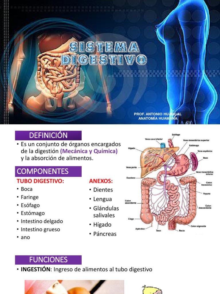 Anatomia Humana 4