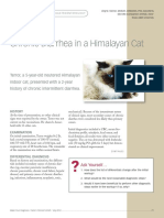 Diarrhea in a Himalayan Cat
