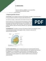 APARATO GENITAL MASCULINO.docx