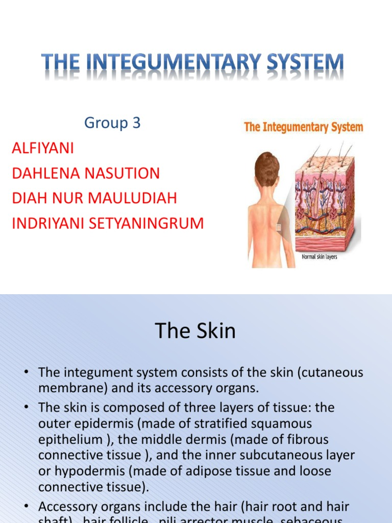 The Integumentary System Fix Leprosy Skin