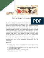 Cultivar-Hongos-Ostras-en-casa2.pdf