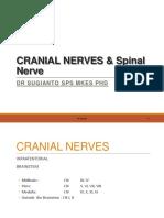 cranial nerves lecture blok X 2014.pdf