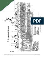 bblec6ABOSPG05.pdf