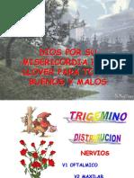 02 Trigemino II