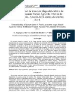 Determinación de insectos plaga del cultivo de punica granatum.pdf