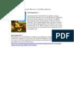 5.Ευγενία Φακίνου, Η Μεγάλη Πράσινη. Ανάγνωση Ολόκληρου Λογοτεχνικού Έργου