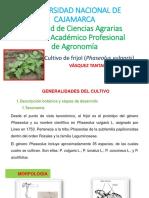 Cultivo de Frejol (Phaseolus Vulgaris l)