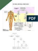 1- A2_e15 Organizacion Del Sistema Nervioso