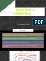 DIENCEFALO Y CEREBELO I (1).pptx