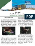 Platypus.pdf