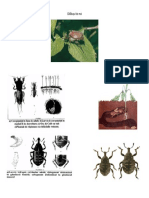 Fisa Insecte Care Ataca in Pepiniere Si Plantatii