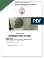 Descripcion Fosiles mesozoico