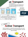 Lesson 3- Active Transport PP