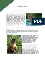 Animais Do Brasil