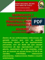 Enfermedades Reproductivas de Los Bovinos Ppt