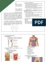 Primeros Auxilios - Anatomia