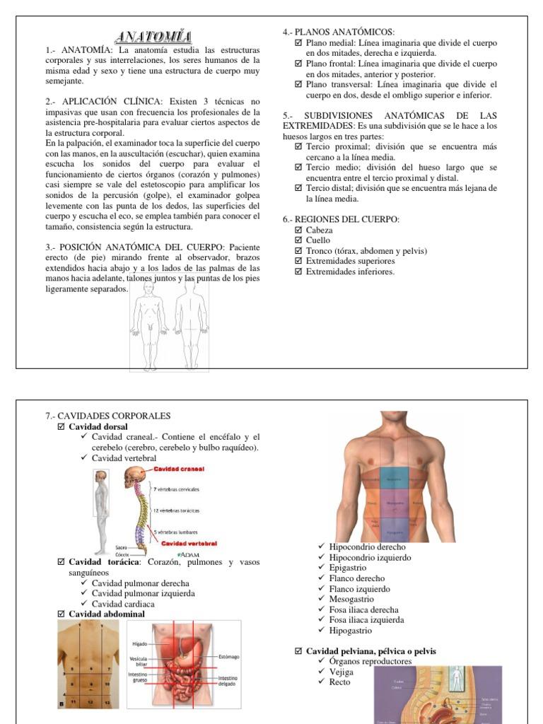 Moderno Superficie Libre Definición Anatomía Ideas - Anatomía de Las ...
