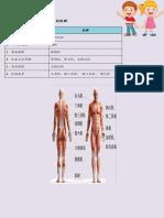 肢体活动及涉及的肌群