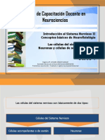 Apunte E Introducci n Al Sistema Nervioso II Neuronas