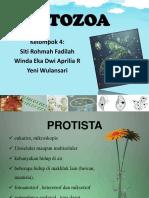 ppt protozoa