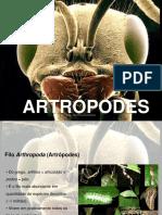 Aula de Artropodes
