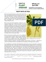 Pea Root Rot