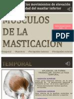 282129904-Musculos-de-Masticacion-ppt.pptx