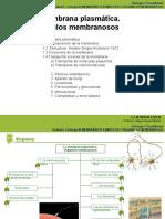 citologia 9.ppt