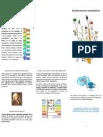 clasificaciones taxonomicas