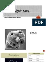 Hymenolepis Nana Li