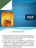 CLASES DE CARBOHIDRATOS.pptx