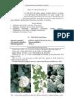 04 Rosaceae ID
