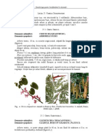 05 Fabaceae ID