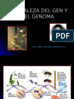 Naturaleza Del Gen y El Genoma