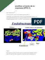 Control Glucolítico a Través de La Fosfofructoquinasa