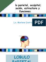 3.3 Lobulo Parieto Occipital