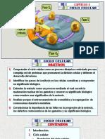 (3)a Ciclo Celular - Arteaga m