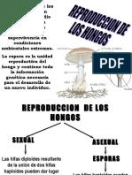 reproducciondehongos-090801223622-phpapp02