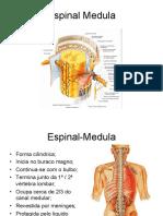 CNI_Espinal_Medula_11-12