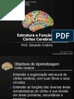 Sistema Nervoso Sistema Límbico