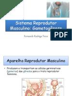 Sist Reprodutor Masculino - Gametogênese