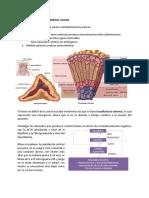 17. Insuficiencia Adrenal Aguda