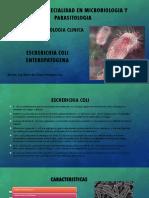 Trabajo Final Escherichia Coli Enteropatogena