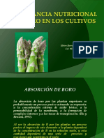 Importancia nutricional del Boro.pdf