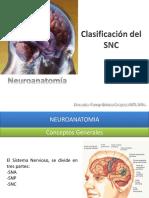 02 Clasificacion Del Sistema Nervioso