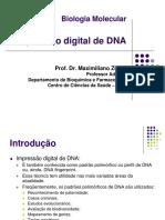 Aula 8 - Impressão Digital de DNA- RFLP e RAPD