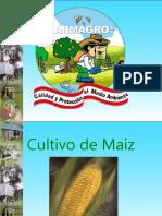 Cultivo de Maiz 2010