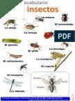 Los Insectos PDF