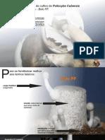 guia de cultivo basico ilustrado 2012 PF TEK.pdf